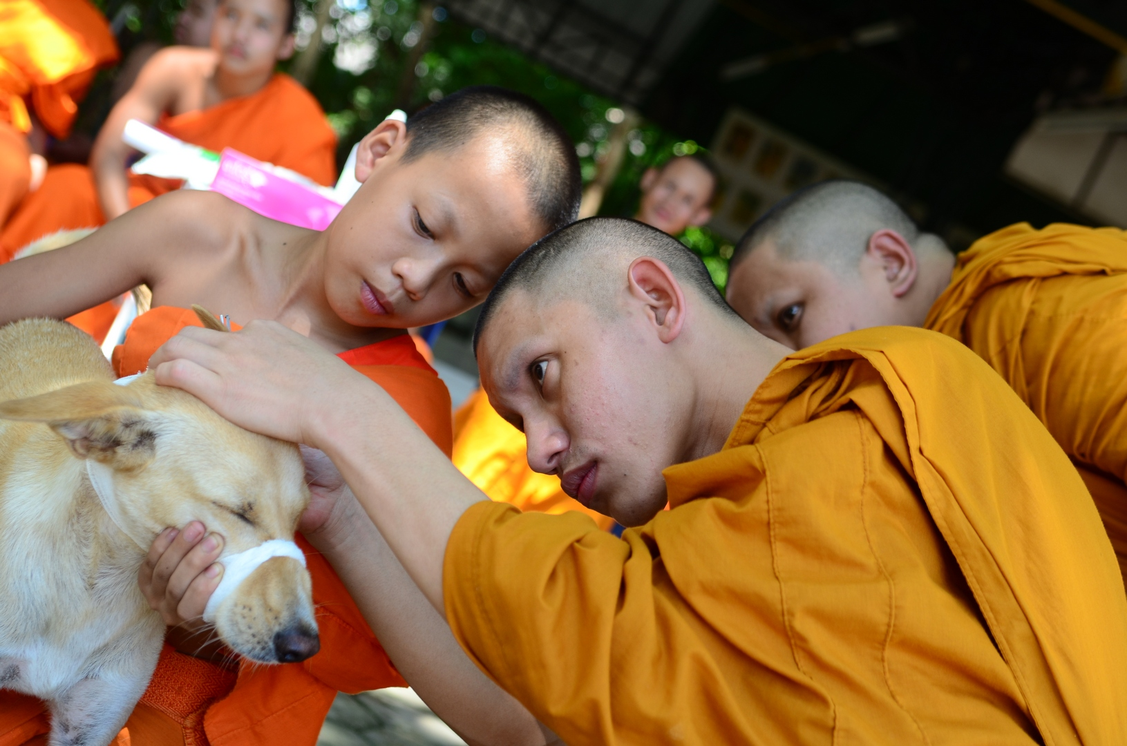Humane handling and care training for monks